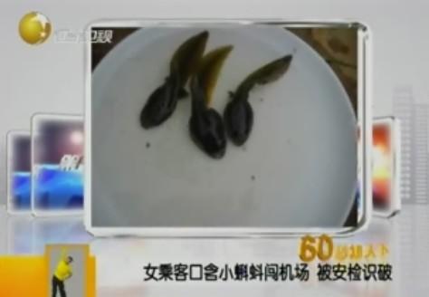 女乘客携3只蝌蚪遭广州机场行李安检机扫描发现[图]