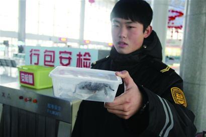 青岛车站行李安检机扫描发现毒蜘蛛[图]